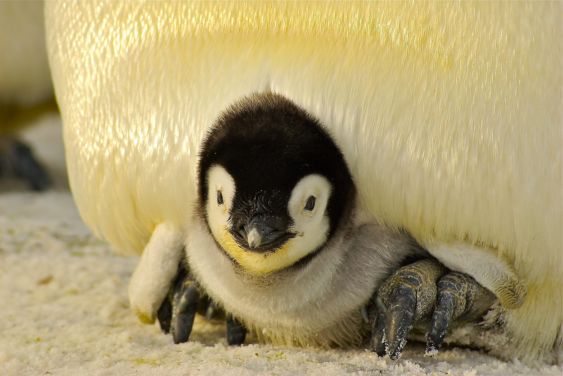 Penguins everywhere: getting cozy with Linux